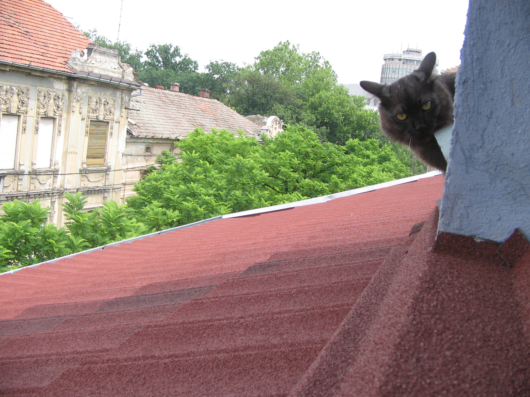 Tisa pe acoperis 2