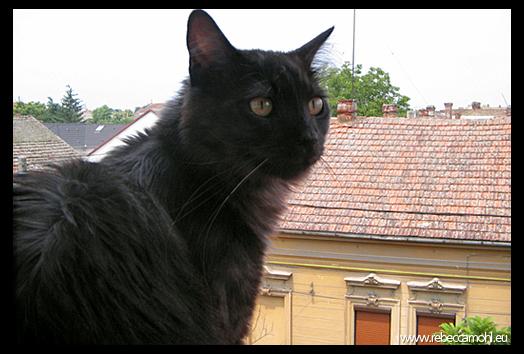 Tisa pe geam